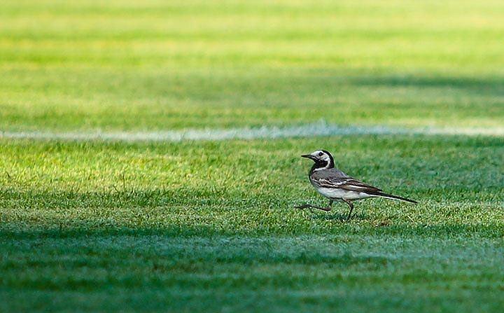 madár a fűben - forrás: